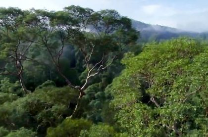 Nature Is Speaking – Kevin Spacey is The Rainforest